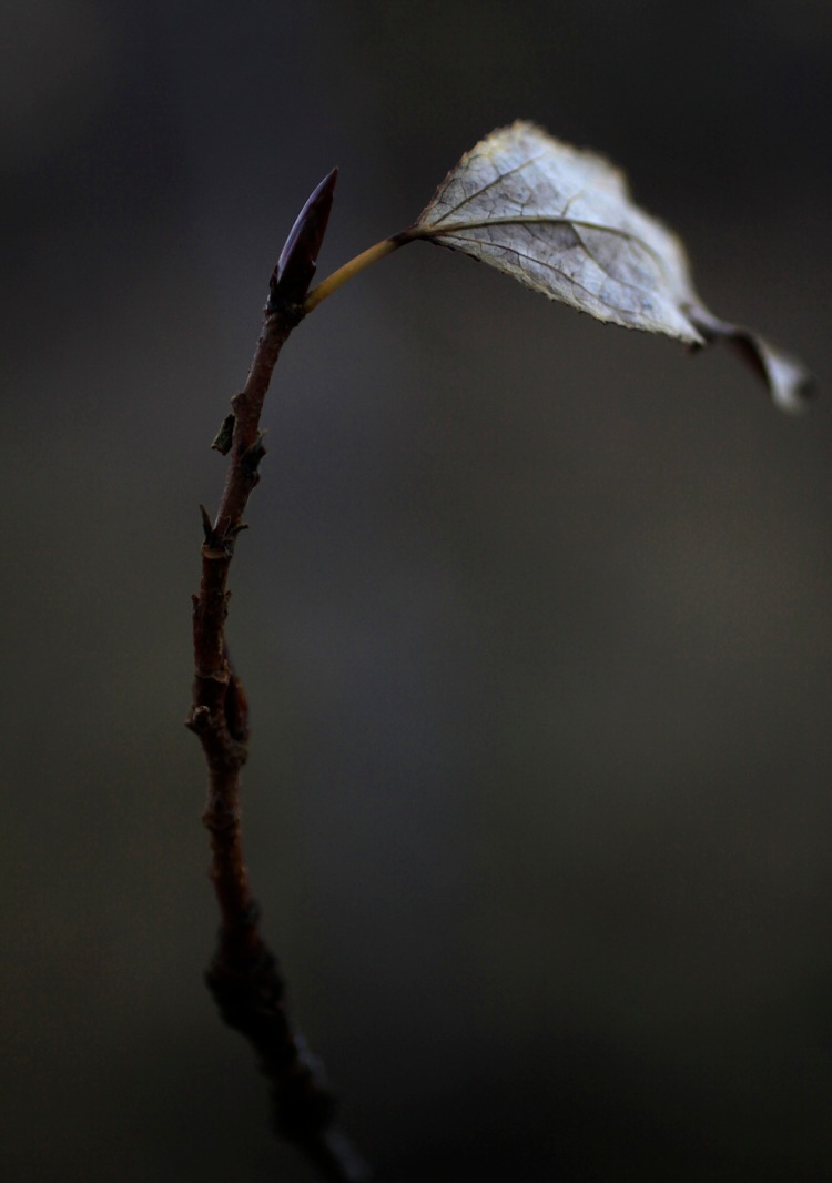 darkleafweb