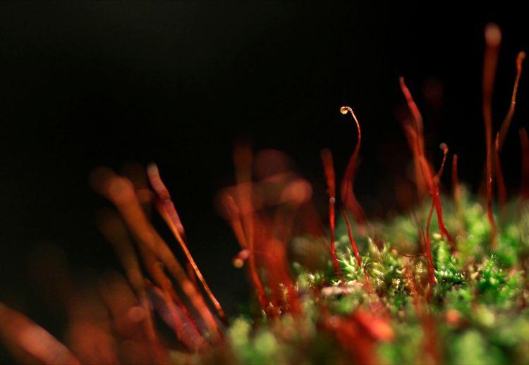 moss2web