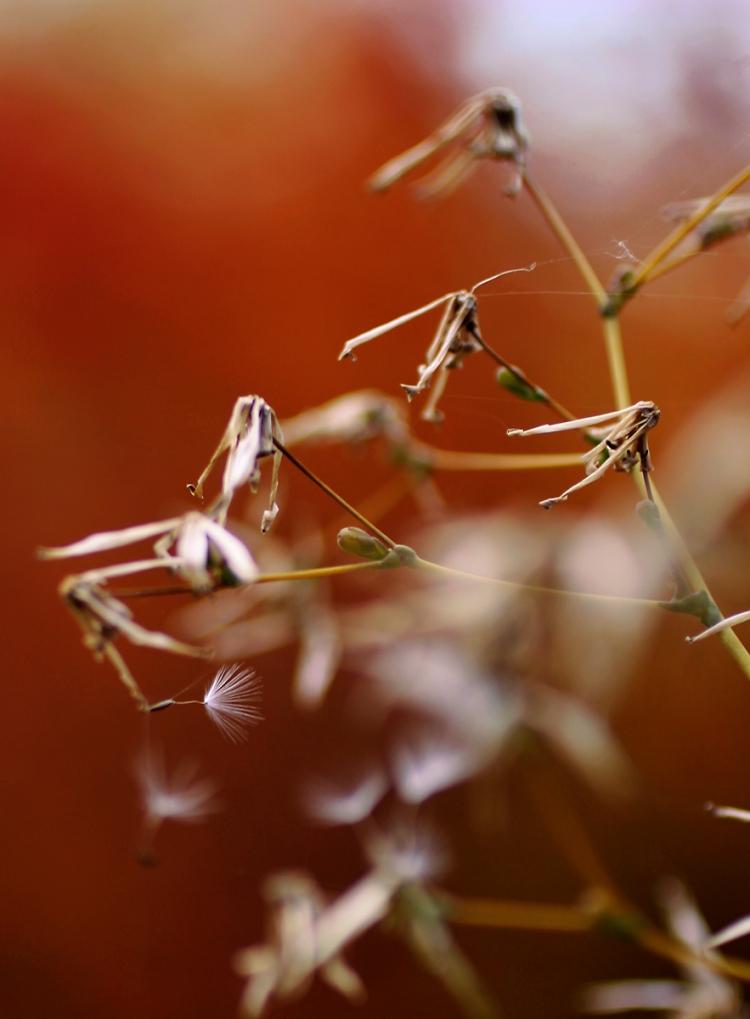 seedweb