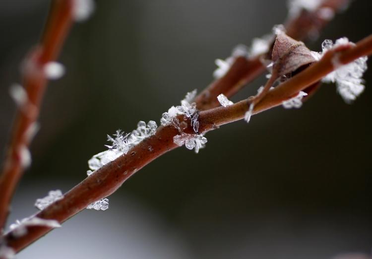 snowflaketreeweb