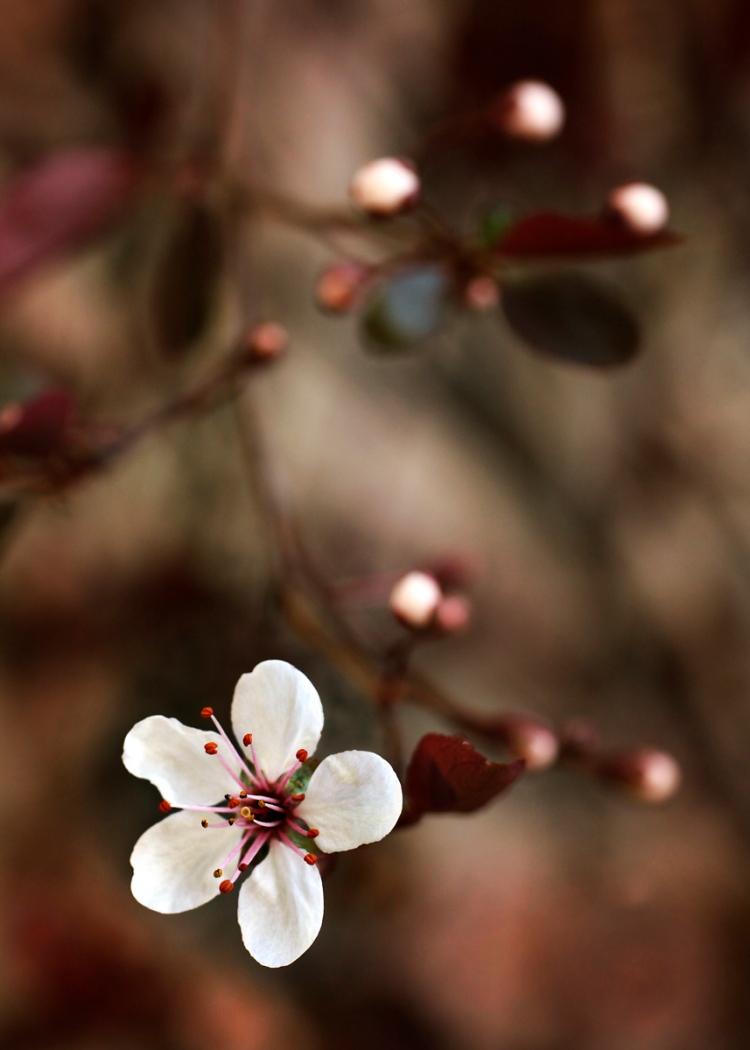 treeflowersweb