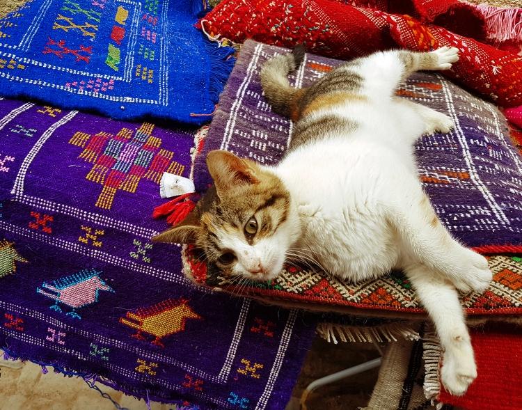 11x14 Cat Rug Morroco