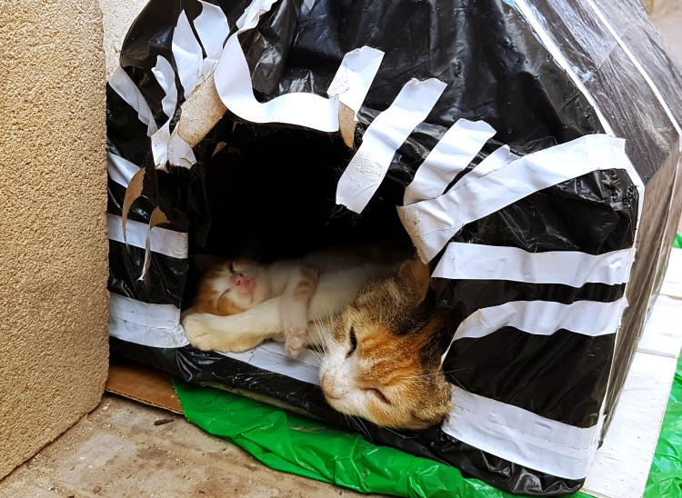 cat alt6