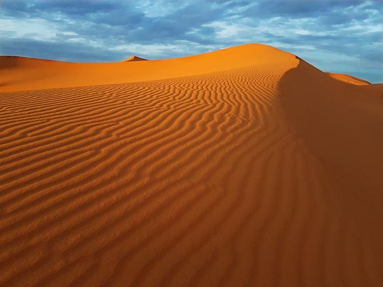 8 Sahara Web