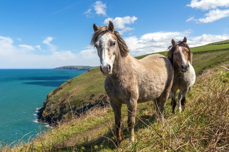 wales pony